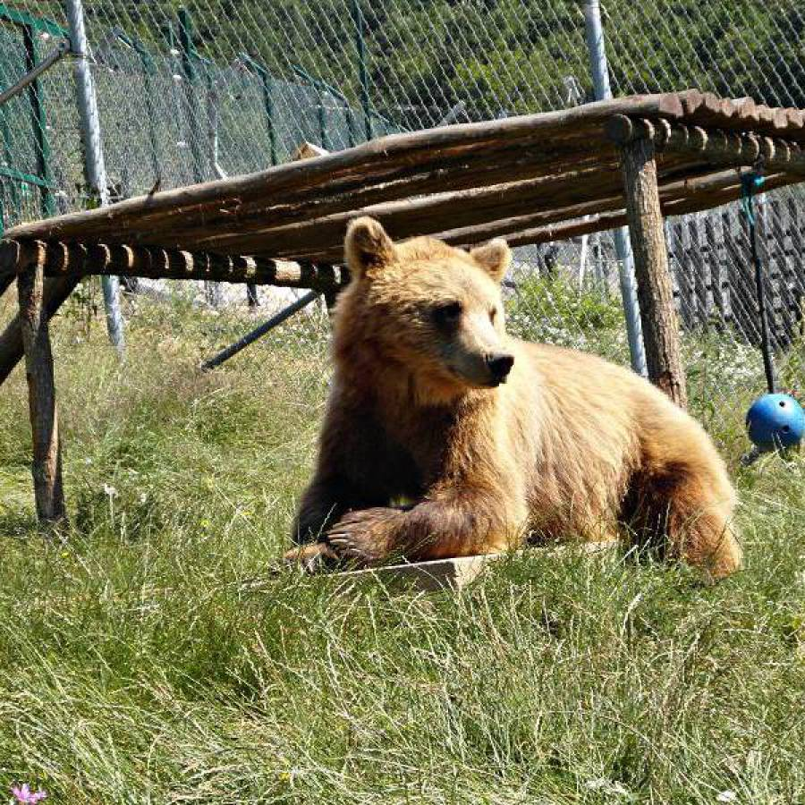 Kosovo Bear Sanctuary hobo-team